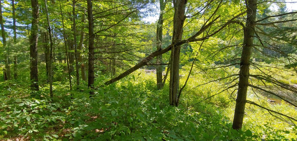 Remove underbrush and dead trees for your camp